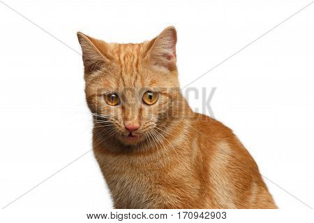 Portrait of Ginger Cat Surprised Staring down on Isolated white background, front view