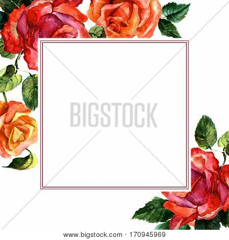 Wildflower rose flower frame in a watercolor style isolated. Full name of the plant: rose, hulthemia, rosa. Aquarelle wild flower for background, texture, wrapper pattern, frame or border.