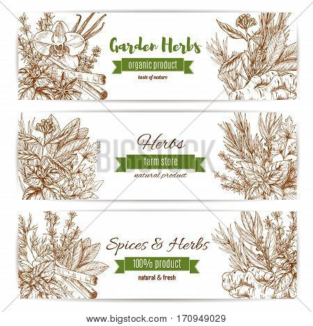 Spice and herbs banner set. Natural basil, rosemary and mint, pepper, vanilla and cinnamon, parsley and ginger, thyme and marjoram, dill and bay leaf. Spice shop label, organic farm design
