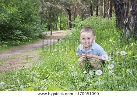 Spring in the forest little boy sits in a clearing fluffy white dandelions.
