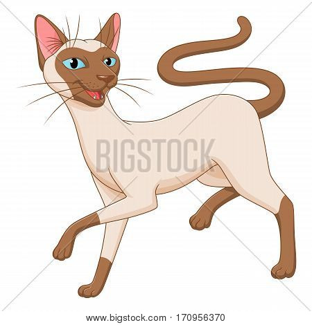 Cartoon Siamese cat on the white background.