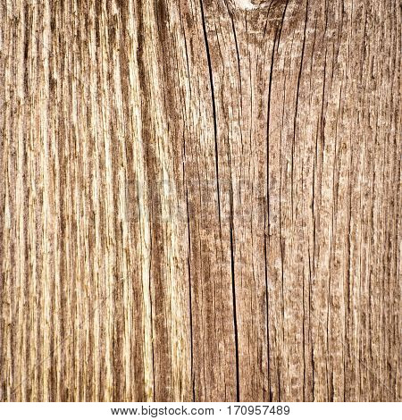 wood texture background. closeup of old wood board with knots