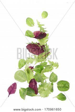 Salad leaf. Lettuce isolated on white background