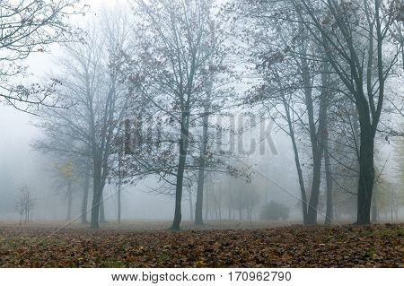 park in autumn season in a small fog. The foliage of a maple fallen to the ground and the dark trunks of plants. The photo was taken close-up, small depth of field and low visibility due to haze.
