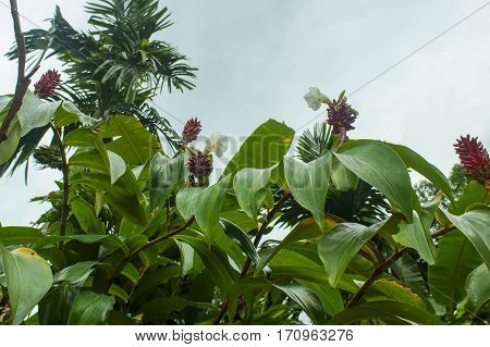 large red flowers on the bushes in the jungle, exotic plants, beautiful backgrounds, close-up