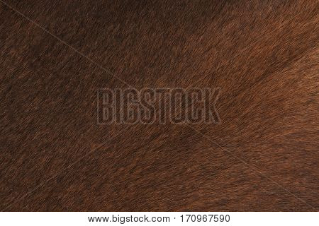 a closeup of brown cow skin with hair