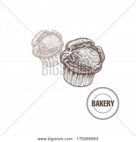 Bakery products. Muffin isolated on white background. Vector food illustration art. Style Vintage engraving. Hand drawing of brown ink.