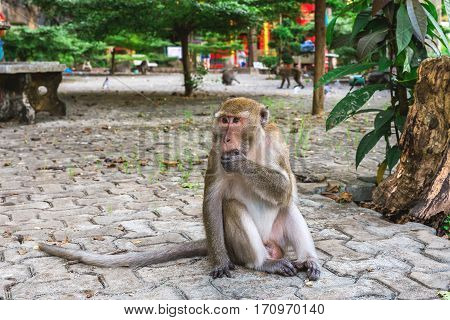 Funny Monkey At Tiger Cave Temple, Krabi