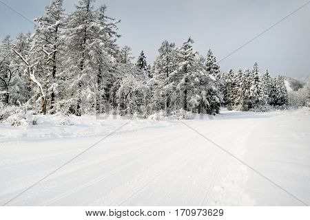 Groomed snow trail in Myoko, Japan. The snow covered trees can be fully appreciated in the early morning quiet.