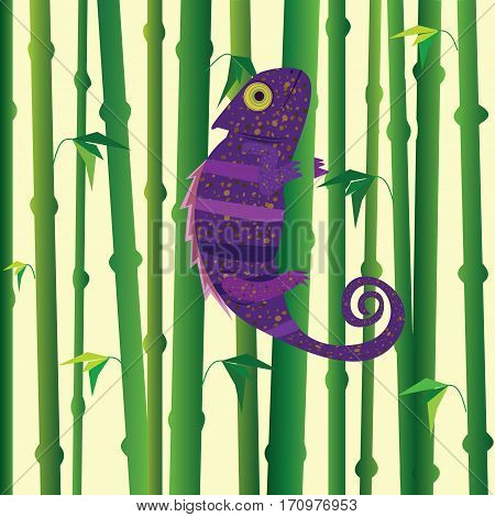 Violet chameleon walking on green bamboo. Bamboo forest background.