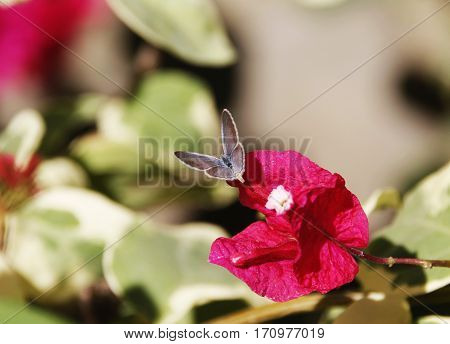 a tiny beautiful butterfly showing its back on a flower