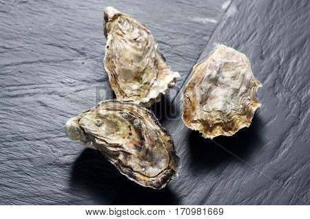 Fresh raw unopened oysters on a slate