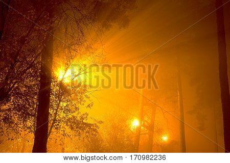 Gloomy street tree in the fog, mist