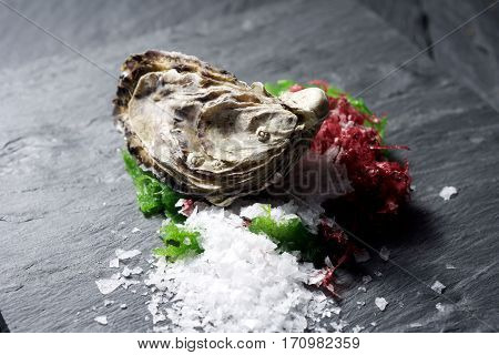 Raw Oysters On Slate