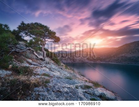 Tree Growing From The Rock At Sunset