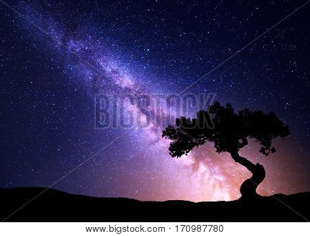 Milky Way And Tree On The Hill.