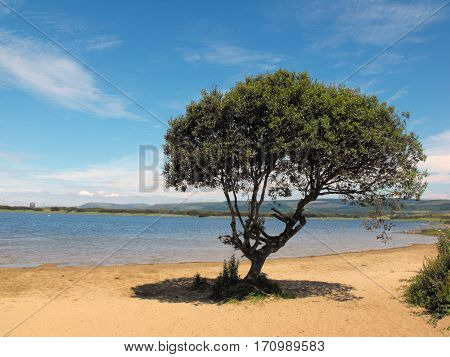 Lone Tress at Kenfig Wildlife Reserve, South Wales, UK