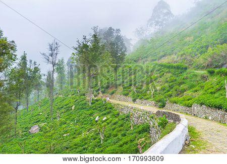 The Road Through Tea Plantation