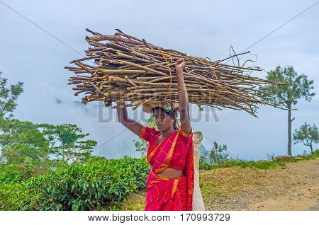 Woman Carry Brushwood