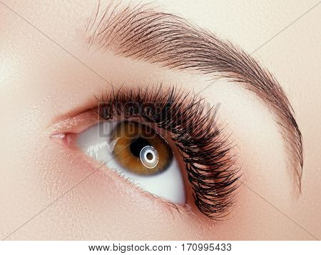 Beautiful Macro Shot Of Female Eye With Extreme Long Eyelashes And Black Liner Makeup