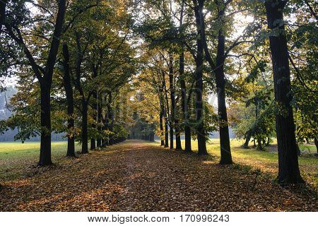 Monza (Brianza Lombardy Italy): the park at fall (october) a path