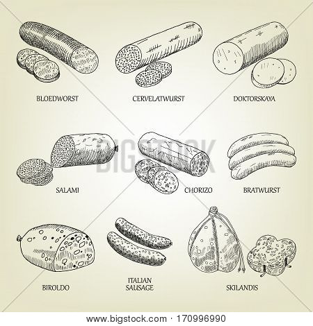 Different kinds of smoked, cooked and dry sausages. Vector illustration. Graphic sketch with frankfurter collection used for advertising meat products, butcher shop, recipe book or logo design.