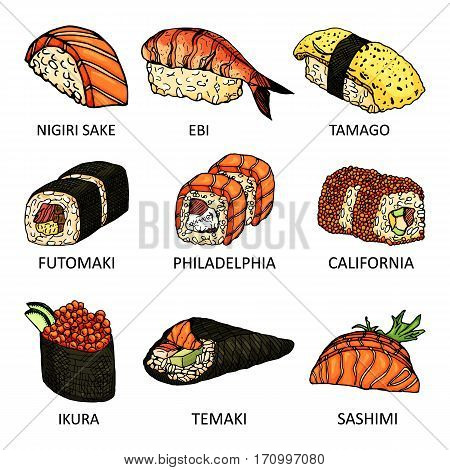 Colourful sketch with different kinds of sushi. Vector illustration with line seafood icon. Hand drawn tasty rolls used for advertising sushi menu, recipe book or logo design.