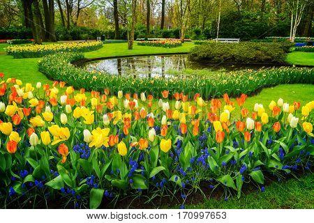 Lane with tulips in formal garden Keukenhof, Netherlands, toned