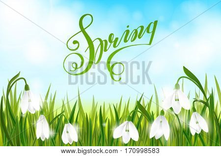 Spring background with galanthus snowdrop flowers, green grass, lettering Spring and blue sky.