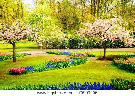 Colourful Blooming cherry trees and flowerbeds in an Spring Formal Garden, toned
