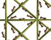 Ants on a green grass. On a white background. poster