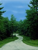 winding road in lush forest with two deer grazing poster