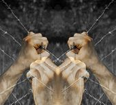 Lots of coloured tortured hands grasping desperately barbed wire on black and white background poster
