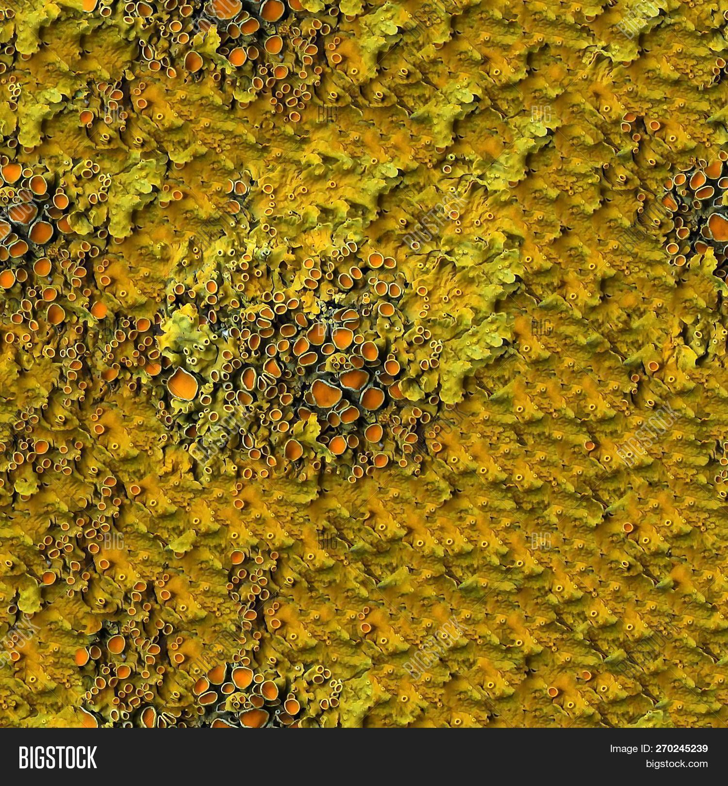 Seamless Abstract Image Photo Free Trial Bigstock