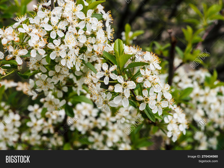 Beautiful Flowers Tree Image Photo