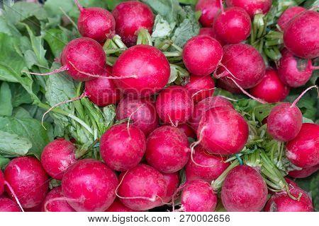 Freshly Harvest Red Purple Colourful Radish.growing Radish Vegetable Background.fresh Red Organic Ra