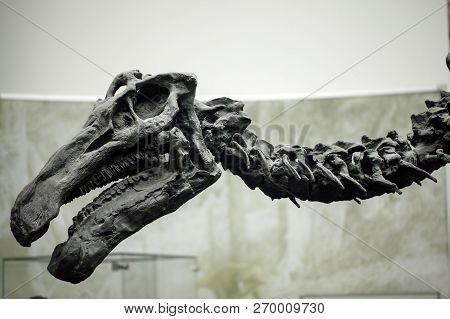 Ancient Prehistoric Dinosaur Skeleton Fossile