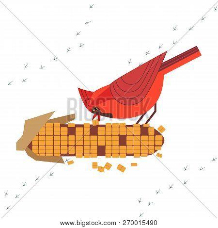 Cute Red Northern cardinal bird feeding by corn seeds poster. Comic flat cartoon. Minimalism simplicity design. Winter season birds of backyard. Template vector scavenging birdwatching card background poster