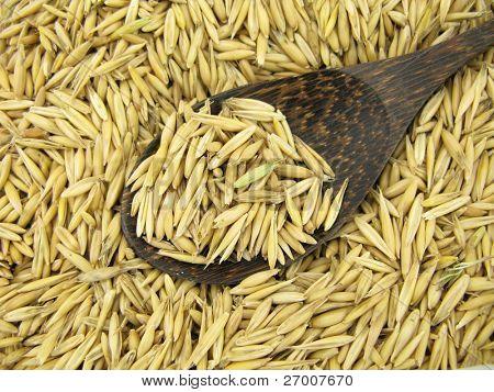 Oats oat grains poster