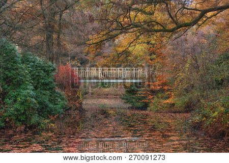 Autumn Landscape In Ohligser Heide Nature Reserve In Bergisches Land,solingen,north Rhine Westphalia