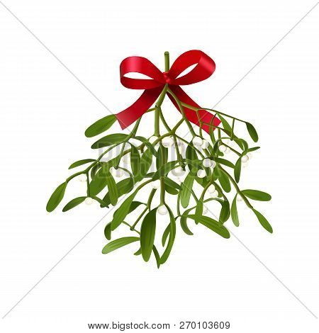 Mistletoe. Vector Illustration Of Hanging Fluffy Mistletoe Sprigs With Berries And Red Bow
