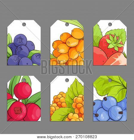 Set Of Vector Berry Labels Illustrations On Gray Background