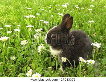 Bunny rabbit black and white