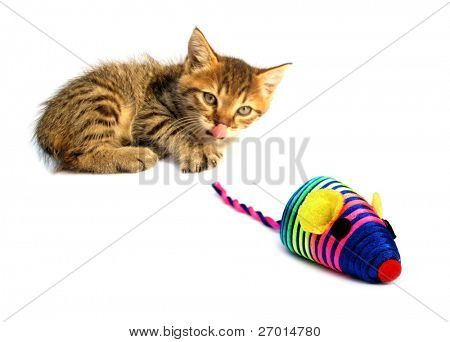 Cat kitty is lurking artificial mouse colorful toy for pets poster