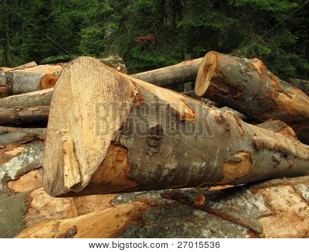 Clearfelling forest clearcut