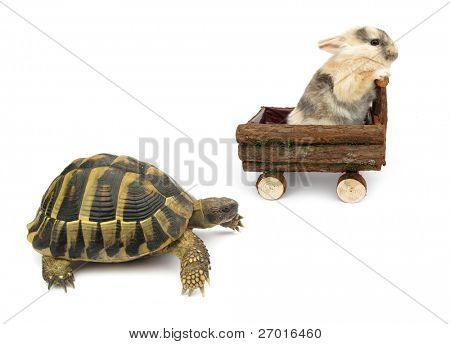 The Tortoise and the Hare Story Alternative Version poster