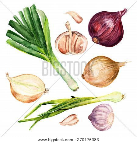 Set Of Watercolor Images Of Onions, Leek And Garlic On White Background. Edible Plants Of The Genus
