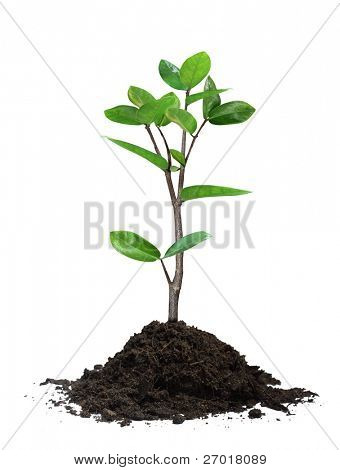 Young tree in plant
