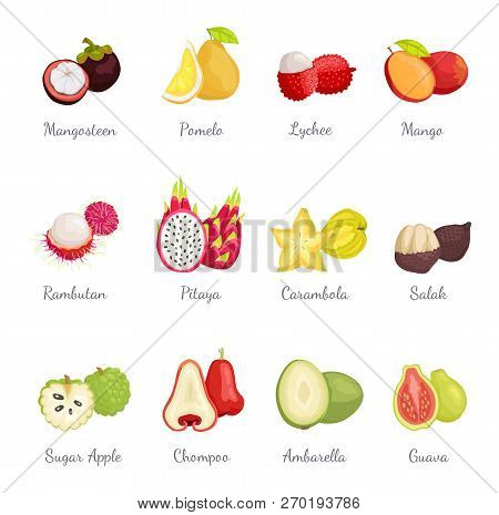 Mangosteen And Pomelo, Lychee And Mango Set Exotic Tropical Fruits Vector. Succulent Carambola Slice