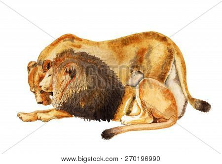 Watercolor Image Of Lion And Lioness On White Background. Concept Of Love